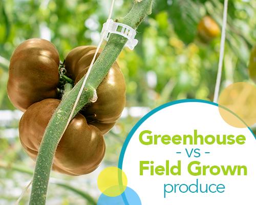 Greenhouse vs Field Grown Produce